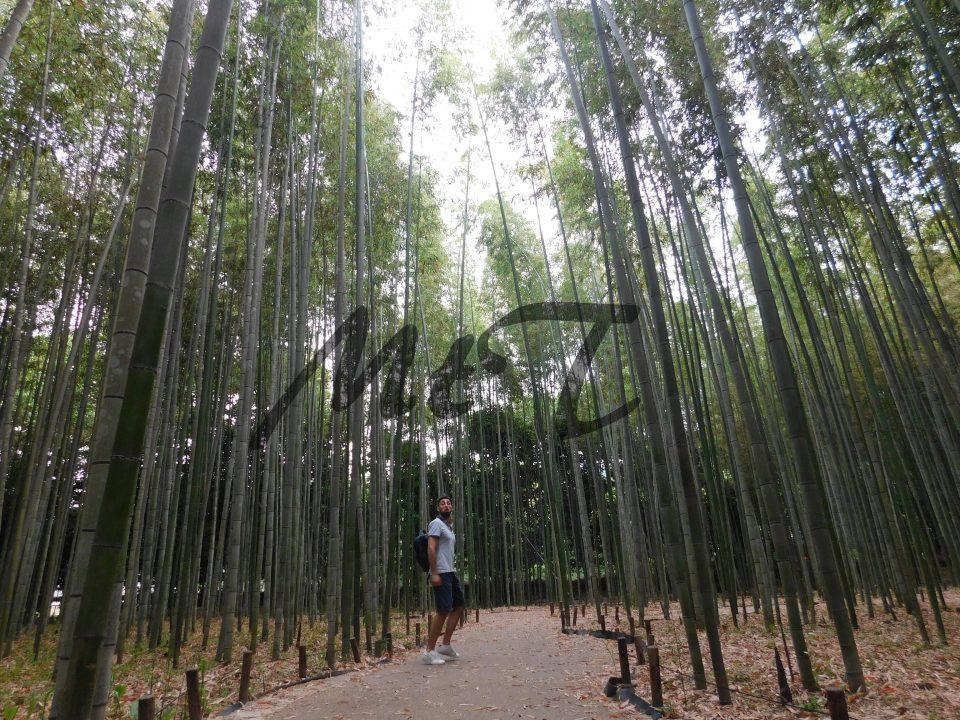 La foresta di bambù di Arashiyama è davvero unica nel suo genere!